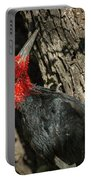 Magellanic Woodpecker - Patagonia Portable Battery Charger