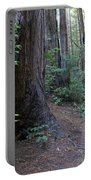 Magical Path Through The Redwoods On Mount Tamalpais Portable Battery Charger