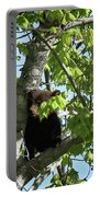Maine Black Bear Cub In Tree Portable Battery Charger
