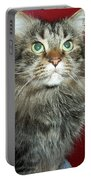 Maine Coon Portrait Portable Battery Charger