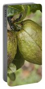 Malabar Chestnuts Portable Battery Charger
