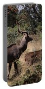 Male And Female Mountain Nyala Portable Battery Charger