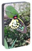 Male Birdwing Butterfly Portable Battery Charger