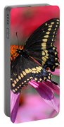 Male Black Swallowtail Butterfly On Echinacea Plant Portable Battery Charger