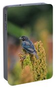 Male Cowbird Feasts On Milo In Shiloh National Military Park, Tennessee Portable Battery Charger