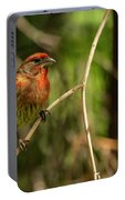 Male Finch In Red Plumage Portable Battery Charger