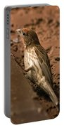 Male House Finch V10 Portable Battery Charger