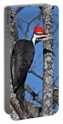 Male Pileated Woodpecker 6340 Portable Battery Charger