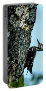 Male Pileated Woodpecker Portable Battery Charger