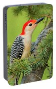 Male Red Bellied Woodpecker In A Tree Portable Battery Charger