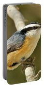 Male Red Breasted Nuthatch 2151 Portable Battery Charger