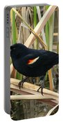 Male Red Winged Blackbird Portable Battery Charger
