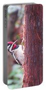 Male Yellow-bellied Sapsucker Portable Battery Charger