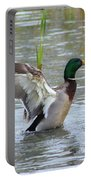 Mallard Duck Landing In Pond Portable Battery Charger