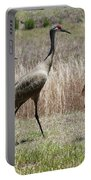 Mama And Two Juvenile Sandhill Cranes Portable Battery Charger