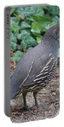 Mama Quail Profile With Ivy Portable Battery Charger