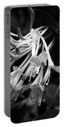Mandarin Honeysuckle Vine 1 Black And White Portable Battery Charger