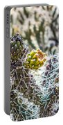 Many Stems Of Poky Small Cactus In Desert Portable Battery Charger