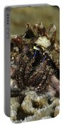 Marine Hermit Crab Portable Battery Charger