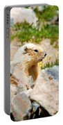 Marmot On Mount Massive Colorado Portable Battery Charger