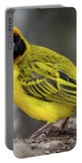 Masked Weaver Bird Facing Camera On Log Portable Battery Charger
