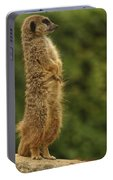Meercat Portable Battery Charger