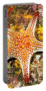 Mexico, Gulf Sea Star Portable Battery Charger