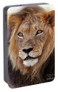 Mighty Lion In South Africa Portable Battery Charger