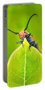 Milkweed Beetle Portable Battery Charger