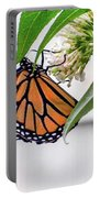 Monarch Butterfly In The Garden 3 Portable Battery Charger