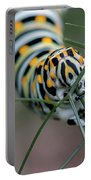 Monarch Caterpillar Clutches Dill In Pincers, Macro Portable Battery Charger