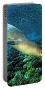 Monk Seal Dive Portable Battery Charger