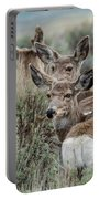 Montana Mule Deer On A Spring Night Portable Battery Charger
