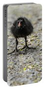 Moorhen Chicks Portable Battery Charger