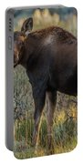 Moose Calf In Fall Colors Portable Battery Charger