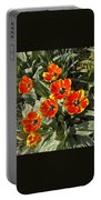 Morning Tulip Blooms    Indiana   Spring Portable Battery Charger
