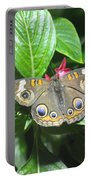 Moth 1 Portable Battery Charger