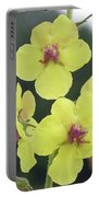 Moth Mullein Wildflowers - Verbascum Blattaria Portable Battery Charger
