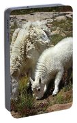 Mountain Goat Nanny And Kid Foraging At Columbine Lake - Weminuche Wilderness - Colorado Portable Battery Charger