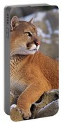 Mountain Lion On Snow-covered Rock Outcrop Portable Battery Charger