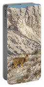 Mule Deer Buck In Winter Sun Portable Battery Charger