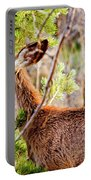 Mule Deer Foraging On Pine On A Colorado Spring Afternoon Portable Battery Charger