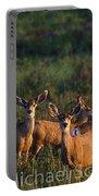 Mule Deer In Velvet 04 Portable Battery Charger