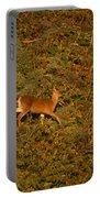 Mule Deer - Mattole Beach Portable Battery Charger