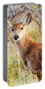 Mule Deer Posing  In The Colorado Spring Afternoon Portable Battery Charger