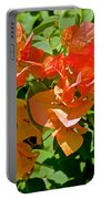 Multi-colored Bougainvillea At Pilgrim Place In Claremont-california  Portable Battery Charger