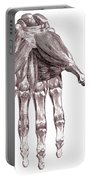 Muscles, Hand, Albinus Illustration Portable Battery Charger