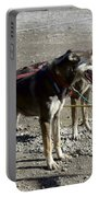 Mushers At Caribuo Crossing Portable Battery Charger