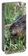 Muskrat Eating Portable Battery Charger