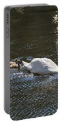 Mute Swan With Three Cygnets Following Portable Battery Charger